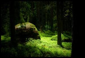 Mysterious_Glade_by_Caspau