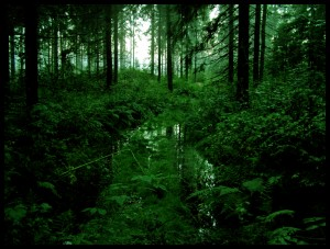 Rainforest__by_noraki