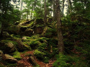 moss_trees_and_magic_things_by_apoetsdream-d2yfbxq