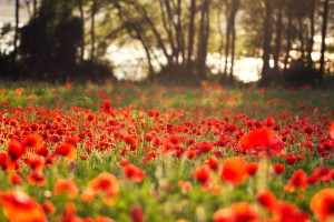 red_land_by_fra_emer-d7ej2zv